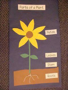 Primer Grado: Las Partes de una Planta. Lo haré en español.