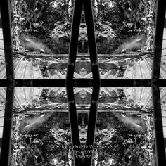 Desde la Ventana. 1/4. Carlos De Vasconcelos. CMDVF. #CarlosDeVasconcelos #CMDVF #Diseño #Ilustración #Arte #Artista #BlancoyNegro #Ventana #Matas / #Design #Illustration #Art #ArtWork #Artist #BlackAndWhite #bw #bnw #Window #Bush Bush, Illustration, Animation, Black And White, Drawings, Artwork, Pictures, Painting, Image