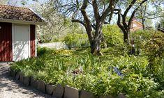 Puutarha: Vanhan pihan uusi kukoistus - Suomela - Jotta asuminen olisi mukavampaa