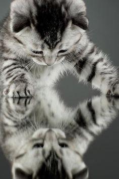 mirror -http://c4.cdn.likes.com/img/e37b2428acc43297b0c0cedf8c5b2609.960x