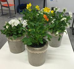 . Plants, Plant, Planets