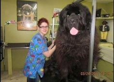 The Biggest Dog Breeds in the World - Likes