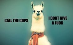 Image via We Heart It https://weheartit.com/entry/147415957 #animal #cops #funny #humour #Law #llama #lol #police #sweater #tumblr