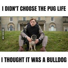 He didn't choose the pug life