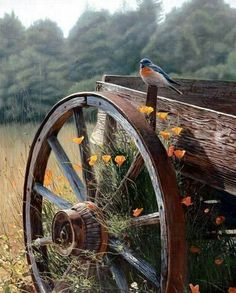 Love old wagons.and blue birds! Country Charm, Country Life, Country Living, Country Roads, Rustic Charm, Esprit Country, Vie Simple, Old Wagons, Country Scenes