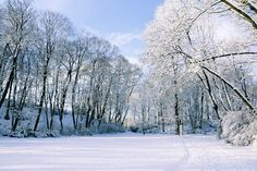 Test your winter safety knowledge with this quiz! Post your score in the comments. Free Pictures, Free Images, Winter Images, Photography Backdrops, Winter Snow, Winter Season, My Photos, Fantasy, Seasons