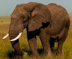 Wildlife Trade Infographic : Humane Society International