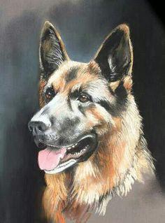 Art in a German Shepherd.