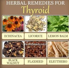 """Thyroid natural remedies: Herbs for thyroid Herbal Remedies for Thyroid  How to Naturally Boost Thyroid Function. Echinacea, licorice, lemon balm, eleuthro, black walnut, flaxseed  """"According to the American Thyroid Association, about 12 percent of Americans end up with some form of a thyroid problem during their lifetime. Thyroid problems generally are common in women than men, and found in 1 out of 8 women. While this affects many people, the disease generally goes undiagnosed, leaving…"""