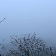Mattina di nebbia  Morning of fog #morning #fog #wednesday #nature #foggy #foggyday #silence #calm #tree #mattina #nebbia @giorgina_fava
