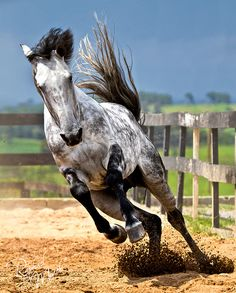 I'm in love... by Raphael Macek - Horse Photography, via Flickr