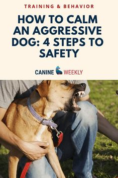 Useful Dog Obedience Training Tips – Dog Training Training Your Puppy, Dog Training Tips, Potty Training, Agility Training, Training School, Training Schedule, Toilet Training, Brain Training, Training Equipment