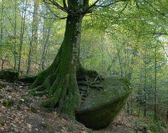 Forêt d'Huelgoat : union du bois et de la pierre !