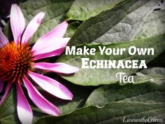 How to Make Your Own Echinacea Tea