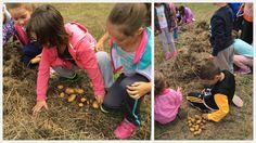 O ano pasado plantamos patacas na horta dun xeito diferente, xa que o fixemos sen sachar. E foi como maxia, hoxe fomos a recollelas e non po...