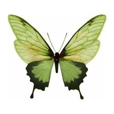 #Beleza #efêmera / #beautiful #buterfly #green