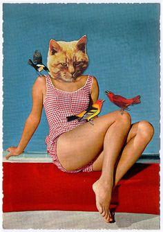 cat & birds ( collages)