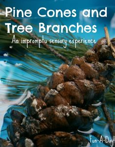 Child-led creation of a nature sensory bin with pine cones and tree branches
