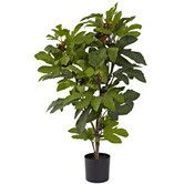 Found it at Wayfair - Fig Tree in Pot