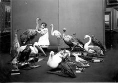 Here is a young girl who is blind examining mounted birds at Sunderland Museum and Winter Gardens.    Charlton Deas, curator at Sunderland Museum was a pioneer in making museums accessible to disabled people, especially blind/visually impaired people. In 1913 he organised a number of handling sessions for both blind adults and children.