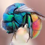 Insects Close Up: You'll Be Shocked At How Beautiful You Find These Pictures