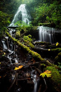 Fairy Falls, Columbia River Gorge, Oregon. I want to go see this place one day. Please check out my website thanks. www.photopix.co.nz