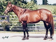 Forest Wildcat(1991)(Colt) Storm Cat- Victoria Beauty By Bold Native. 5x4 To Native Dancer, 5x5 To Nearco. 20 Starts 9 Wins 2 Seconds 1 Third. $478,862. Won Maryland BCH(G3), Finger Lakes BCS(G3). Died In 2008.