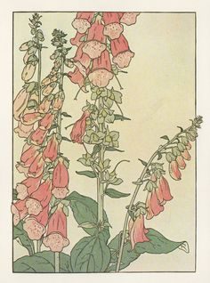 Foxglove ▫ Flower Study in the Art Nouveau Style ▫ Artist probably J Foord. Research ongoing
