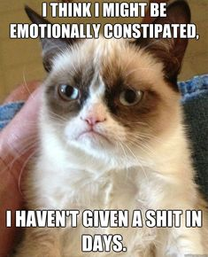 Grumpy Cat - i think i might be emotionally constipated i havent given a shit in days.
