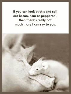 if you can look at this and still eat bacon, ham or pepperoni then there's really not much more I can say to you...