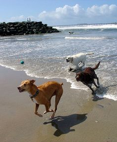 A guide to dog parks in San Diego, California