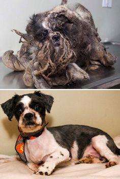 16 Perros antes y después del rescate de la calle