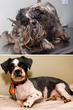 16 Before-And-After Photos Of Rescued Dogs I am so glad these poor dogs were rescued, don't know how someone could do this