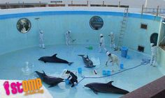 STOMP - Singapore Seen - Tanks at overseas aquariums drained and cleaned -- with dolphins still inside
