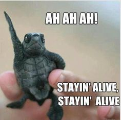 STAYING ALIVE!!