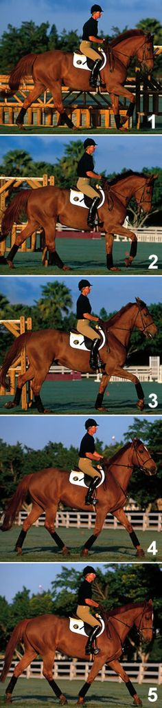 International jumper rider Kim Prince shares tips for making your horse adjustable and keeping him straight to fences. By Kim Prince exclusively for Practical Horseman magazine.
