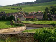 Burgundy & Bordeaux wines in france