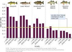 mercury in Lake Champlain fish graphic