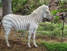 Mais 21 fotografias de animais albinos impressionantes