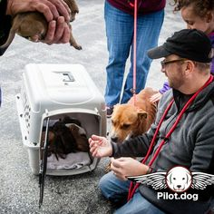 Amber supervises the handling and movement of her puppies by caring humans. http://pilot.dog #aviation #pilotnpaws #instaaviation #instagramaviation #dog #dogrescue #pilotdog #pet #pilot #instagrampilot #instapilot #instadog #foreverhome #rescuedog #dogs #dogsofinstagram #rescuepetsofinstagram