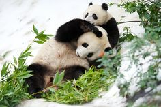 Snow Day for Mr Wu | Flickr - Photo Sharing!