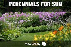 Perennials for Sun & Shade - The most common perennials for each US region