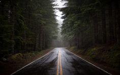 floresta chuva - Pesquisa Google