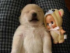 Puppy Talks in Sleep, Hearts Captured