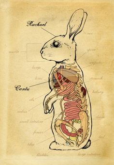 Rabbit Anatomy This is too cute