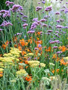 Create a New Garden Border - on HGTV.  Pretty purple and yellows/oranges :)