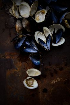 ♂ food styling. still life. Clams-and-Mussels