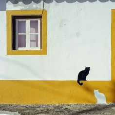The Nicest Pictures: street art  #cats