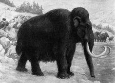El gurú coreano de la clonación se lanza a revivir al mamut