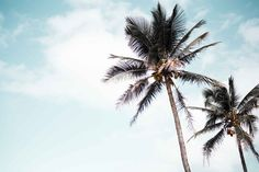 Envie de Fraise ♡ #Summer #Maternity #Palmtrees